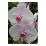 Orquídea - flor rosado (Colossians 2: 3) Plantilla De Tarjeta De Negocio