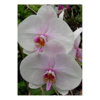 Orquídea - flor rosado (Colossians 2: 3) Tarjetas De Visita Grandes