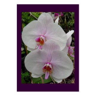 Orquídea - flor rosado (Colossians 2: 3) Plantillas De Tarjetas Personales
