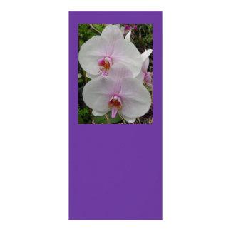 Orquídea - flor rosado (Colossians 2: 3) Lona Publicitaria