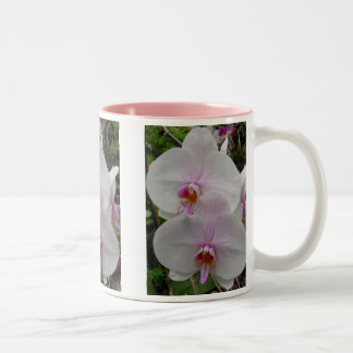 Orquídea - flor rosado (Colossians 2: 3) Tazas De Café