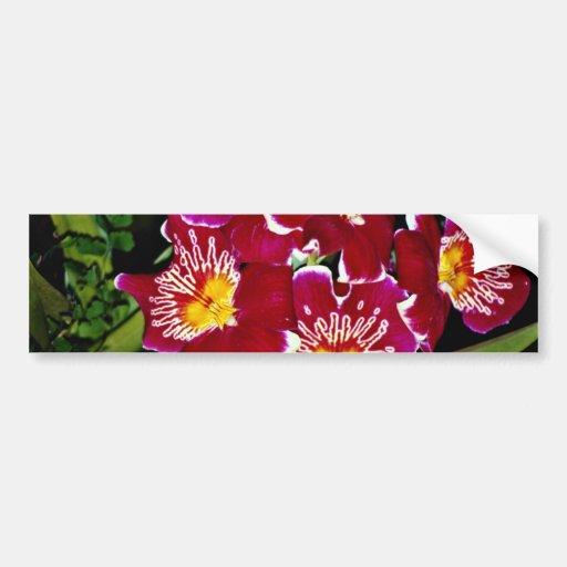 Orquídea, flores del híbrido del miltonia pegatina para auto