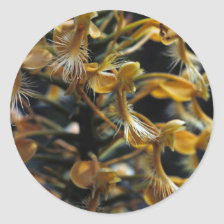 Orquídea franjada amarillo pegatina redonda