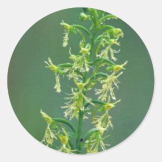 Orquídea franjada desigual pegatina redonda