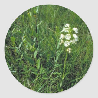 Orquídea franjada pradera pegatina redonda