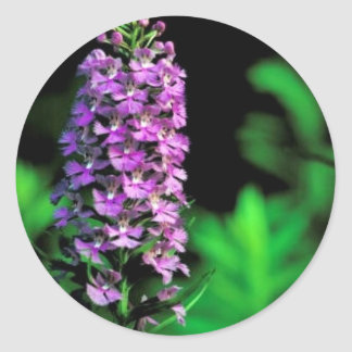 Orquídea franjada púrpura pegatina redonda