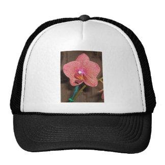 Orquídea Gorras De Camionero