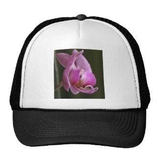 Orquídea Gorro