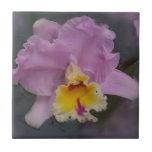Orquídea hermosa azulejo