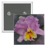 Orquídea hermosa pin