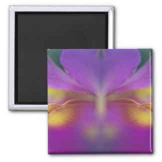 Orquídea híbrida la Florida 2 Imanes