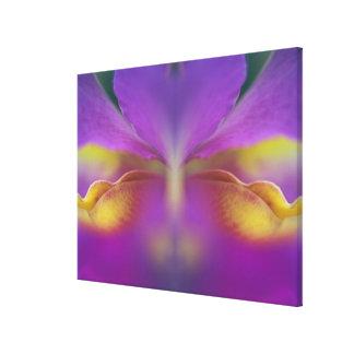 Orquídea híbrida, la Florida 2 Lienzo Envuelto Para Galerías