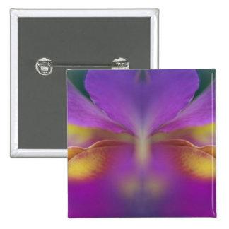 Orquídea híbrida la Florida 2 Pins
