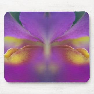Orquídea híbrida la Florida 2 Alfombrilla De Ratón
