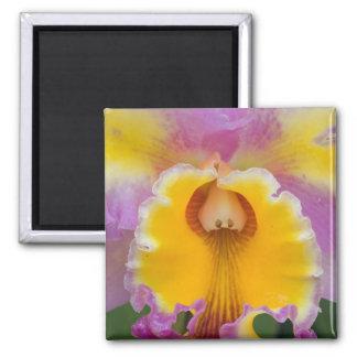 Orquídea híbrida la Florida Imán
