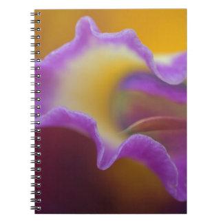 Orquídea híbrida la Florida Cuadernos