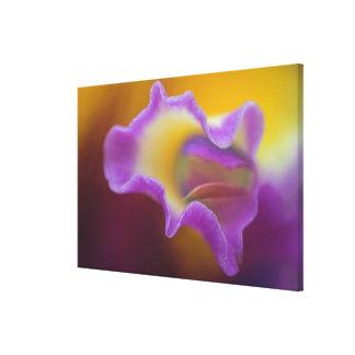 Orquídea híbrida, la Florida Lienzo Envuelto Para Galerías