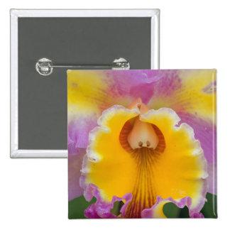 Orquídea híbrida la Florida Pin