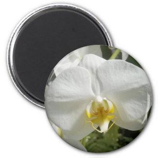 Orquídea Imán Para Frigorifico