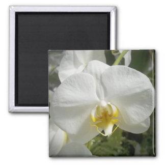 Orquídea Imanes Para Frigoríficos