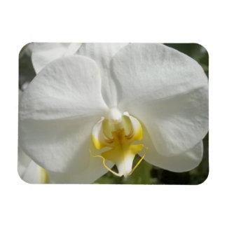 Orquídea Iman Flexible