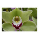 Orquídea Impresiones