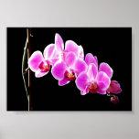 Orquídea, Impresiones