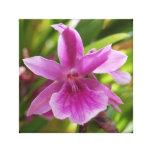 Orquídea Impresiones En Lienzo Estiradas