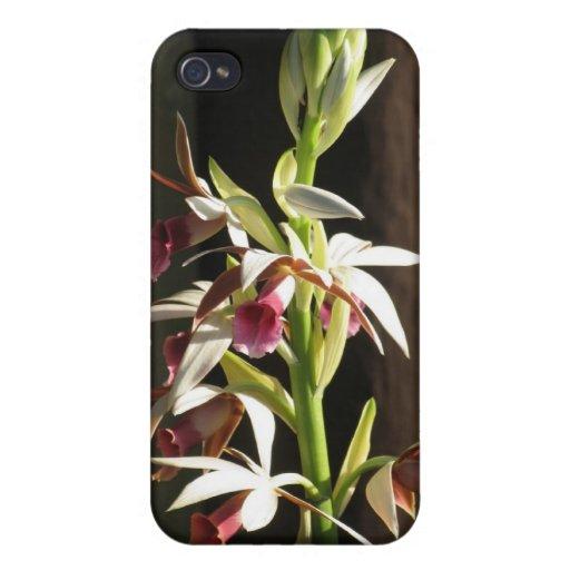 Orquídea iPhone 4 Cárcasas
