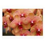 Orquídea macra postal