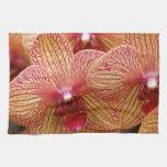 Orquídea macra toalla