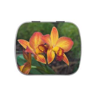 Orquídea magnífica de Rhyncattleanthe del amarillo Frascos De Caramelos