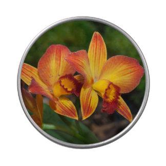 Orquídea magnífica de Rhyncattleanthe del amarillo Jarrones De Dulces
