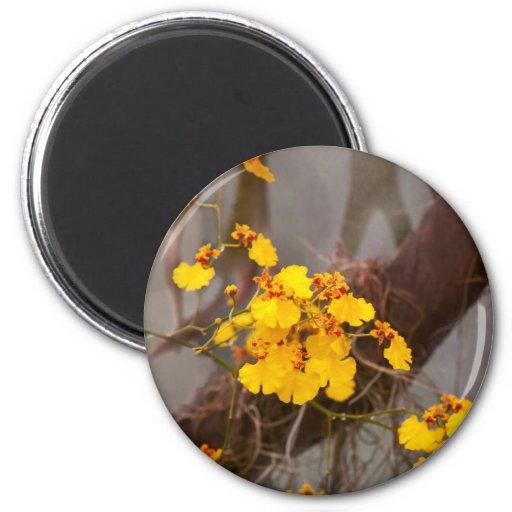 Orquídea - mañana de oro imán de frigorífico