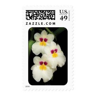 Orquídea - Miltoniopsis - los tres amigos Sello