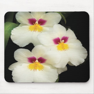 Orquídea - Miltoniopsis - los tres amigos Alfombrillas De Ratón