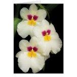 Orquídea - Miltoniopsis - los tres amigos Tarjeta De Felicitación