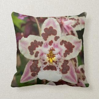 Orquídea multicolora impresionante del cojines
