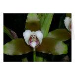 Orquídea ningún 1 por Paxbungle Tarjeta Pequeña