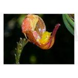 Orquídea ningunos 2 por Paxbungle Tarjeta Pequeña