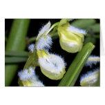 Orquídea ningunos 3 por Paxbungle Tarjeta Pequeña