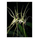 Orquídea ningunos 4 por Paxbungle Tarjeta Pequeña