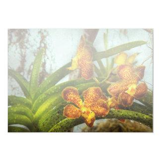 Orquídea - Oncidium - madurada Comunicados