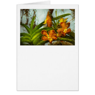 Orquídea - Oncidium - madurada Tarjetón