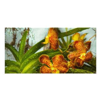 Orquídea - Oncidium - madurada Tarjetas Con Fotos Personalizadas