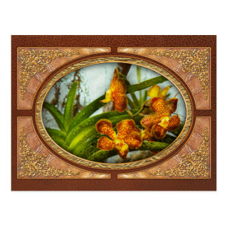Orquídea - Oncidium - madurada Tarjetas Postales