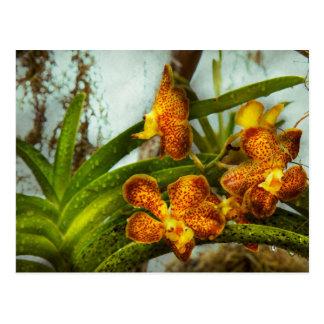 Orquídea - Oncidium - madurada Tarjeta Postal