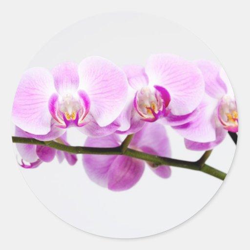 orquídea pegatina redonda