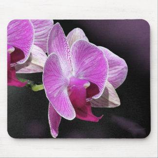Orquídea Phalae Mousepad