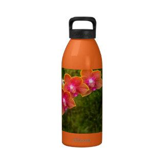 Orquídea - Phalaenopsis - atar el Cupid de Shin Botella De Agua Reutilizable